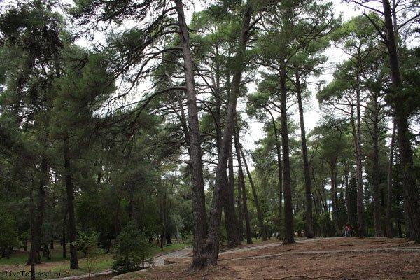 IMG_7319 парк