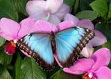 бабочк