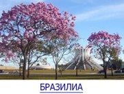БРАЗИЛИА-12
